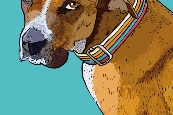 retratomascota_cerca2web